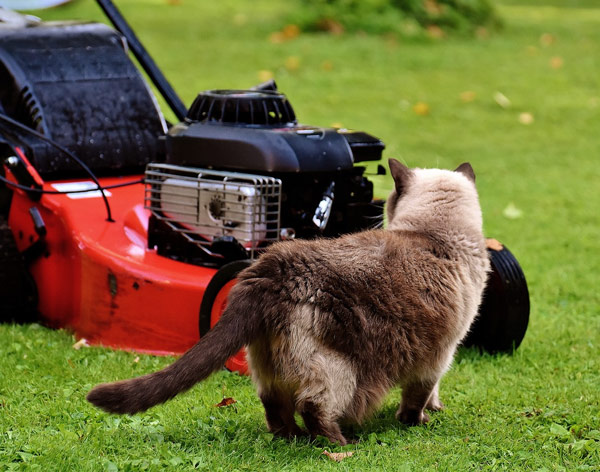 lawn-mower-safety-awareness